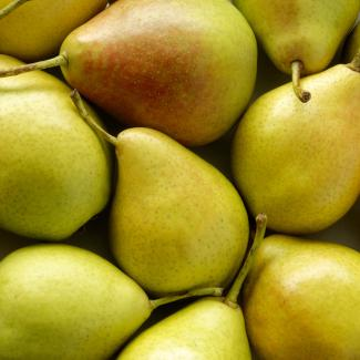 Pear (Fruits of the orchard)